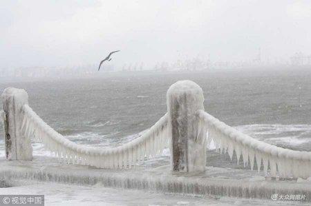 2018年1月11日,山东烟台,海鸥在挂满海水冰凌的护栏前飞过。