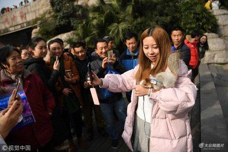 1月11日,重庆观音桥步行街上一市民用绳子牵着一只宠物松鼠逛街,引来不少民众观看拍照。