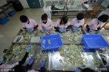 """2018年1月18日,山东省济南市,公交岗位中有一个特殊工种,这就是被人们描述为""""数钱数到手抽筋""""的点钞员。"""
