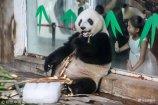 """7月17日是农历""""入伏""""首日,泉城最高气温34 ℃,较为闷热。在济南动物园,饲养员们为大熊猫、老虎、金丝猴等动物采取各种降温避暑妙招,让园内动物们在冰块、西瓜与水花中感受清凉一夏。"""