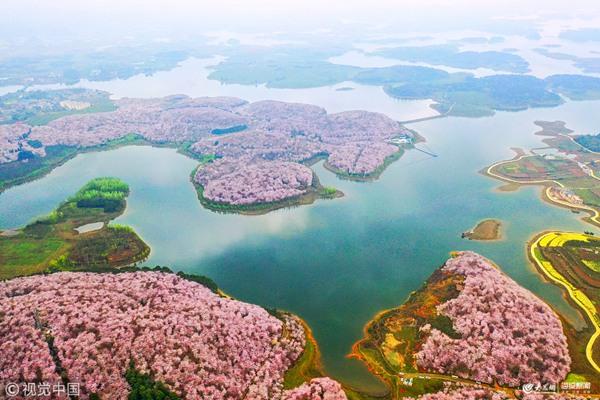 贵州樱花风景区平坝
