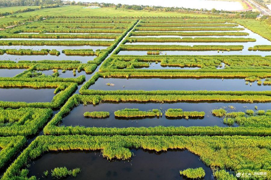 2019年6月21日,山东威海,无人机拍摄的荣成市湿地公园一角。