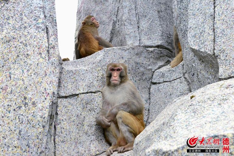 直到1992年,园子里的动物才全部迁入新的笼舍,现如今的猴山,鹿苑,百鸟