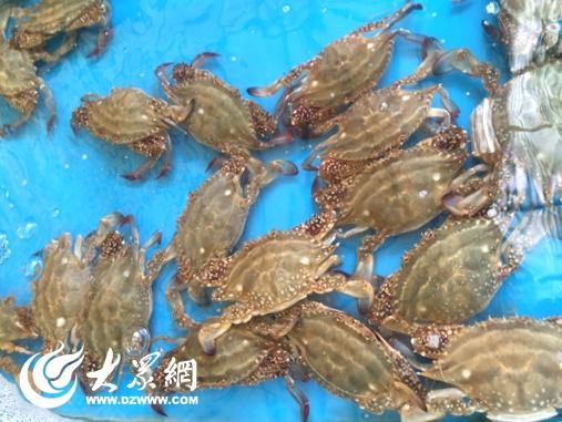 中秋节前日照海鲜市场走俏 价格略有上浮