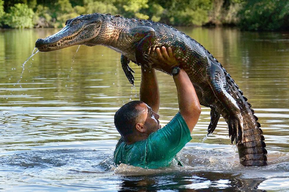 美国男子从小就敢亲近鳄鱼 常与鳄鱼一起游泳