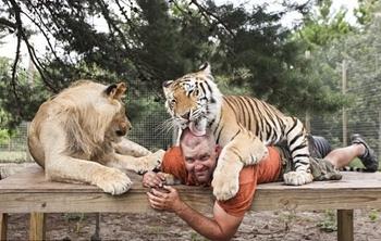 美国男子与6只老虎2头狮子同住 亲似家人