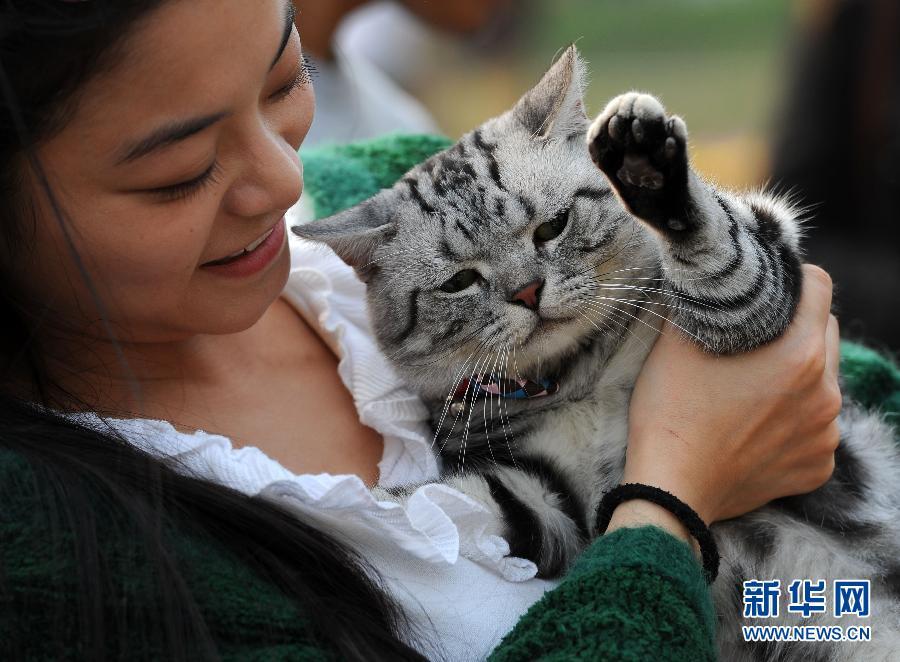 """10月5日,一只宠物猫向观众""""打招呼""""。"""