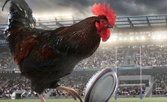 英国一公司推出公鸡日历 称有助母鸡生产