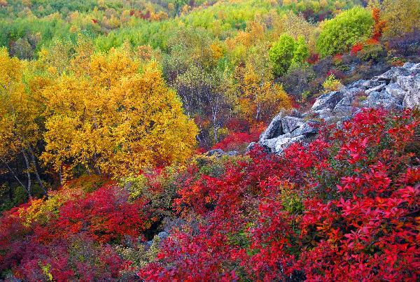 京郊喇叭沟门国家森林公园宜人的秋色