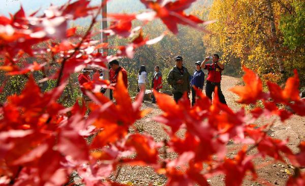 游客在京郊喇叭沟门国家森林公园游玩