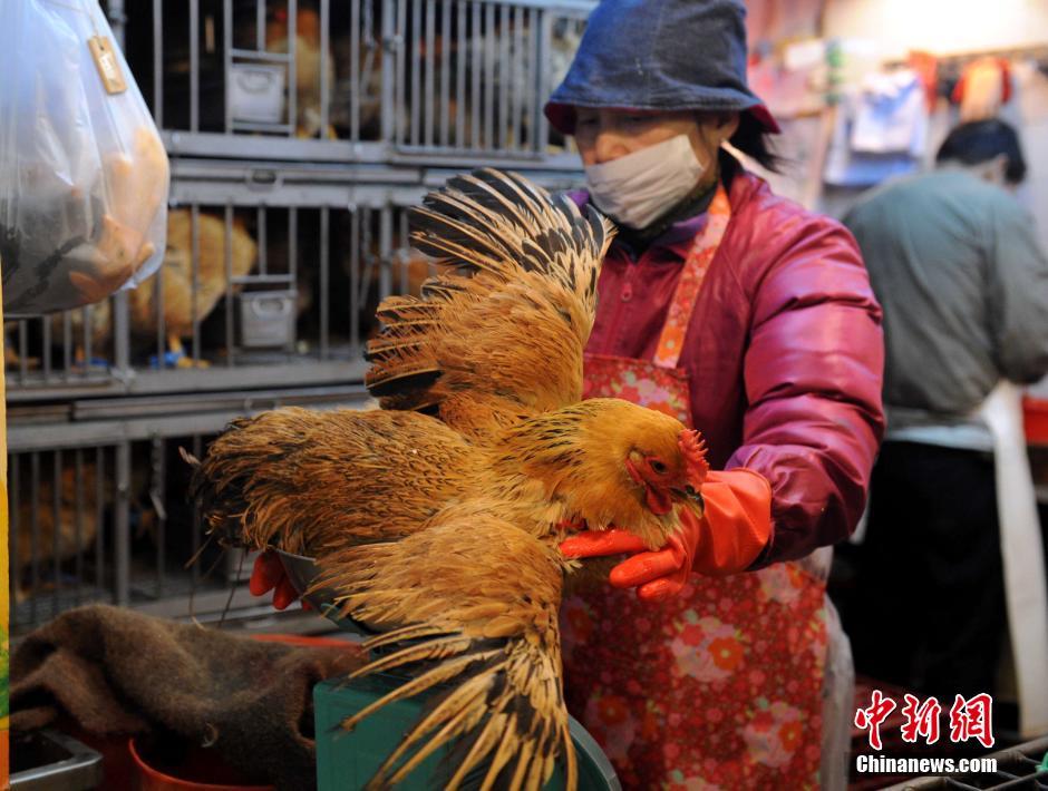 2月19日,香港恢复出售本地活鸡。香港为期三周的禁售活鸡届满,但内地活鸡供港再停4个月。中新社发谭达明 摄