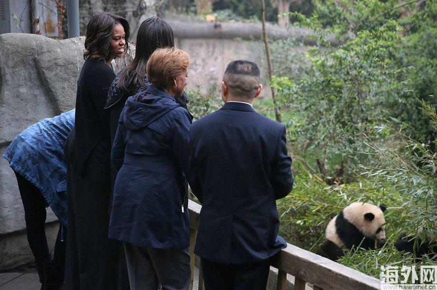 26日上午10时许,美国总统奥巴马夫人米歇尔和她的母亲以及两个女儿一起走进成都大熊猫繁育研究基地,与期盼已久的大熊猫来了一次亲密接触。