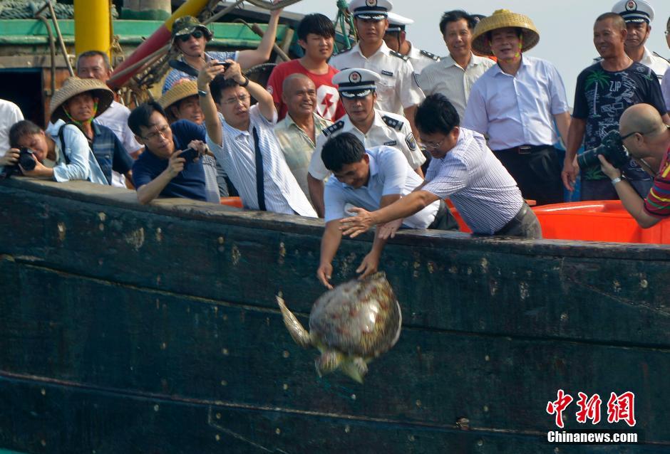 """5月9日,海南省琼海市潭门国家级中心渔港举行""""保护海洋生态,人人参与护蓝""""活动启动仪式,放生了20余只海龟。"""