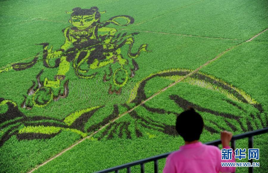 7月1日,一位参观者在欣赏名为《哪吒闹海》的巨型稻田画。