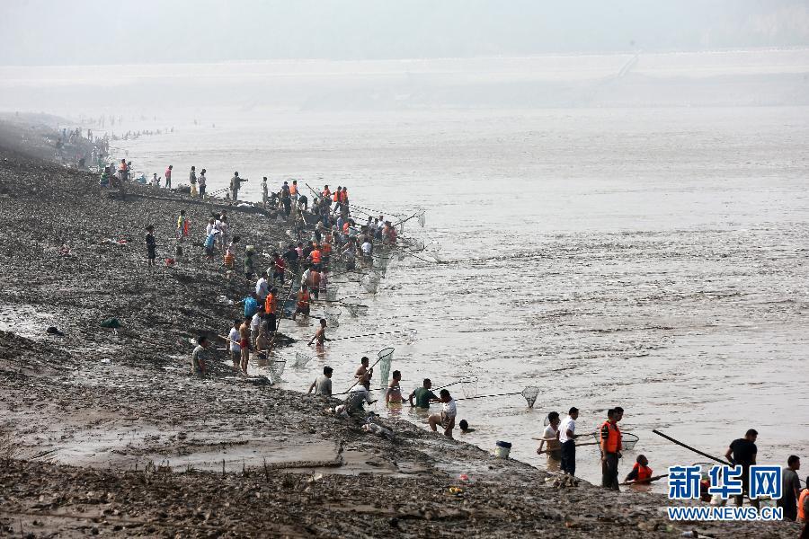 """7月6日,黄河三门峡水库开闸泄洪,河道内出现""""流鱼"""",沿河群众纷纷涌到河道旁及滩涂上捕捞。"""
