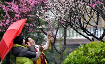 春雨.jpg