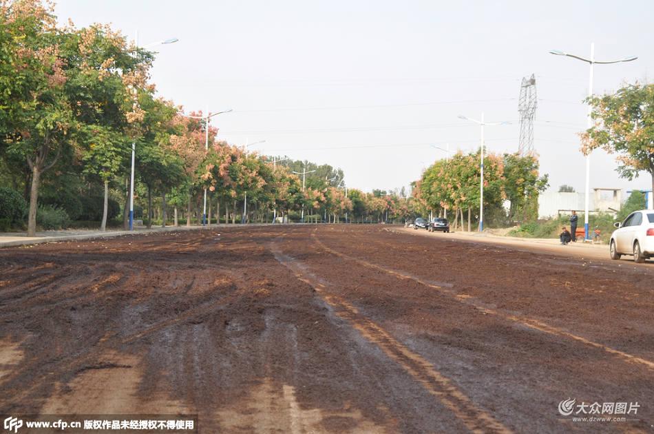 山东菏泽一街道被酒糟铺满 占道数百米