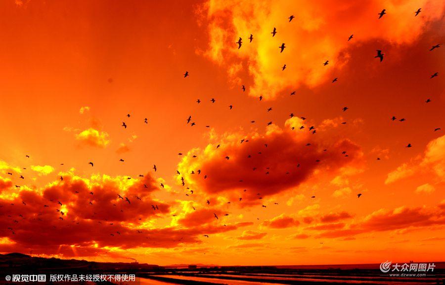 大连黄昏天空现火烧云 群鸟空中舞翩跹