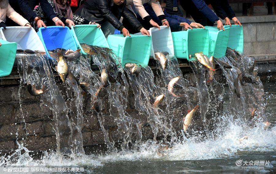 2月22日,山东省济南市,众多市民来到大明湖南岸,以每斤4.5元的价格购买鲤鱼和鲫鱼,集体将鱼儿放生到大明湖,千余尾鱼儿同时倾倒在湖中,场面颇为壮观。