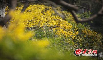 踏青赏花,济南这三个地方最值得去