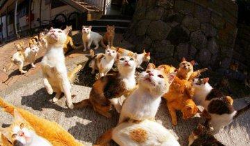 """日本""""猫岛"""" 猫咪数量是人类6倍"""