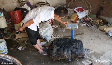 村民发现80公斤太岁 希望能换钱讨媳妇
