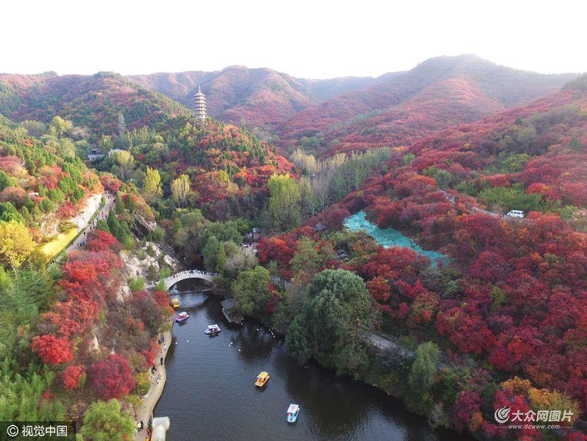 """10月29日,济南南部山区红叶谷景区内,用无人机航拍红叶谷不一样的视角,美到令人""""窒息""""。"""