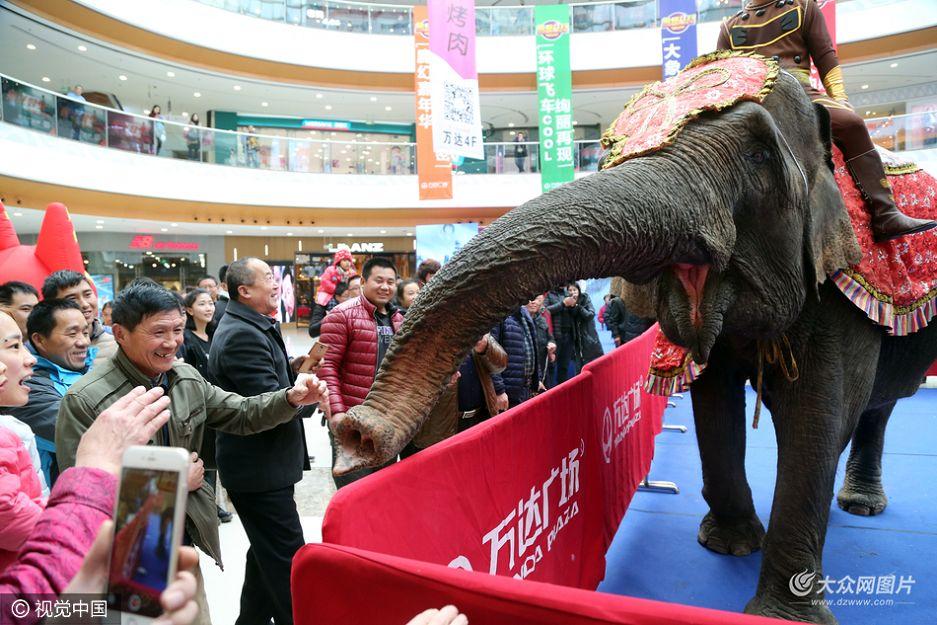 11月22日,泰安某商场为吸引眼球,请来大象助兴。同样前来购物的市民对大象表现出了浓厚兴趣,随着围观市民增多,有些胆大的甚至悄悄上前摸大象鼻子,拍大象的屁股。