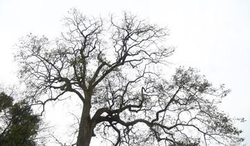 """贵州有棵神奇""""气象树""""-能预测庄稼收成.jpg"""