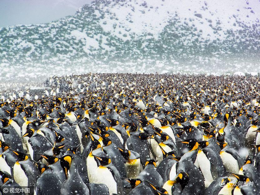 震撼!25万只帝企鹅齐聚南极海滩