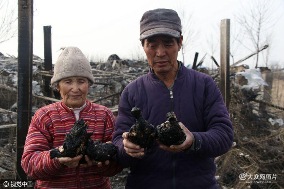 2月18日15点30分左右,滨州市滨城区秦皇台乡苍头王村北1000米处,一鸽棚因烧荒被烧毁,烧死2000余只鸽子,损失近20万元。