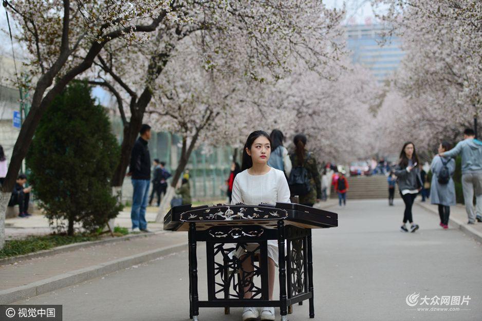 3月19日,大学最美景观长廊花海绽放,美女学生花下抚琴意境醉人。