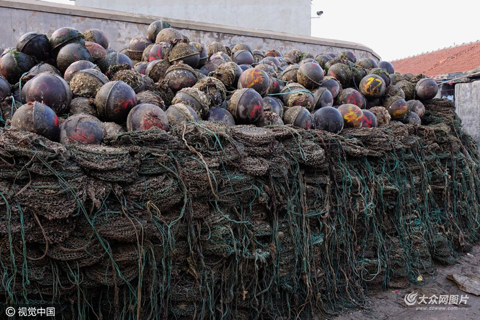 青岛进入扇贝收获季 网笼浮球堆满码头
