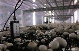 智能型菇房亮相山东邹城--食用菌栽培实现互联网操控.jpg