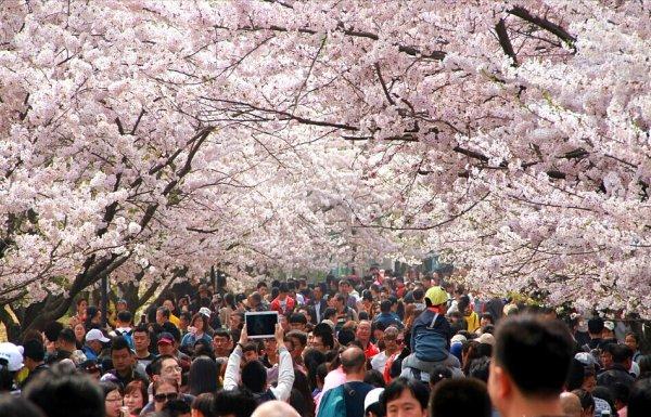 青岛赏花会启幕 大学生着汉服穿越花季
