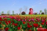 2017年4月19日,山东省诸城市潍河北岸,近20亩园林景观带里的郁金香姹紫嫣红、五彩缤纷、争奇斗艳,吸引了众多市民前来赏花拍照。