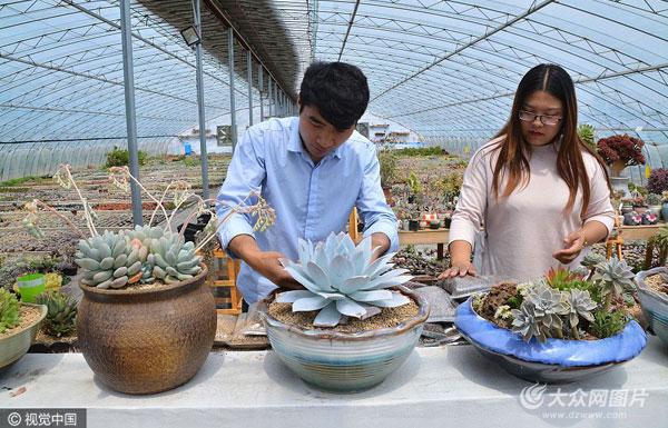 """日照90后小夫妻""""蜗居""""农村 种植多肉植物年入50万"""