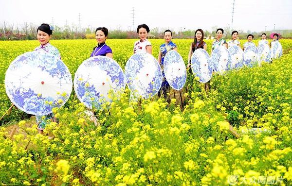青岛:百亩油菜花深春盛开 百名旗袍美女花中畅游