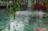 2、进入5月份,趵突泉水位就一直在27.90米至28.01米之间徘徊,一直跌破橙色警戒线。大众网记者 王长坤 摄_副本.jpg