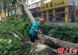 园林工人正对经五纬二路口以北被挂断的树木进行切割处理.jpg