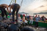 2017年8月5日清晨,浙江台州石塘镇钓滨渔港码头,渔民们正忙着搬运从东海捕捞回来的一箱箱海鲜。