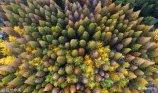 2017年11月14日,航拍济南泉城公园景区,不一样的视角俯瞰全景,五彩缤纷的植被如同童话世界里梦幻一般。