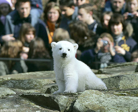 中国网1月7日 报道 据国外媒体报道,德国纽伦堡动物园让新生北极熊幼