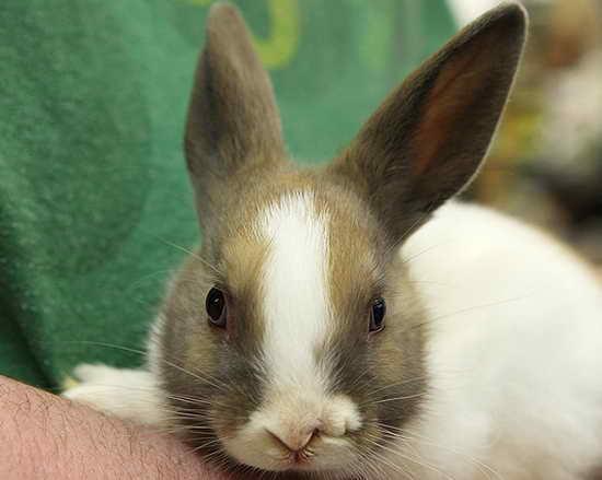 美国小媒体长两个鼻子成兔子明星小山雀的认识图片