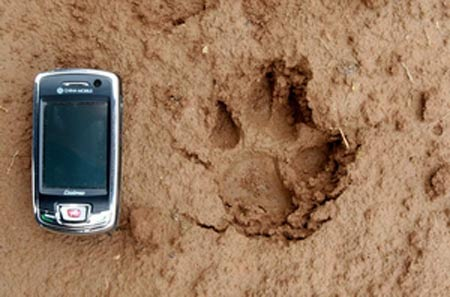 记者的手机和神秘动物留下的脚印对比图
