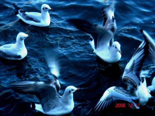 动物与自然和谐相处
