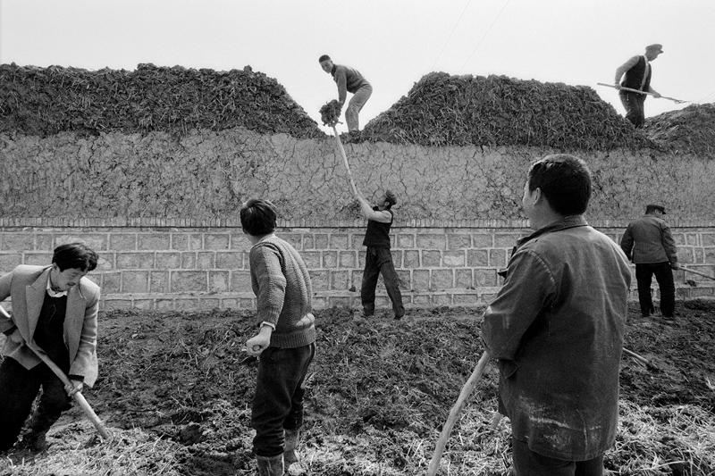 1、《盖房》2000年,东营下镇乡四合村,黄河滩区的人们来自鲁西南,他们就地取材盖房子,这样的房子冬暖夏凉。(黄利平).jpg