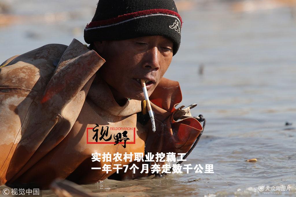 2月3日,千亿国际娱乐网址滨州,在千亿国际娱乐网址北部的产藕区里活跃着这样一群人,他们以帮种植户采藕获取劳务报酬为生。