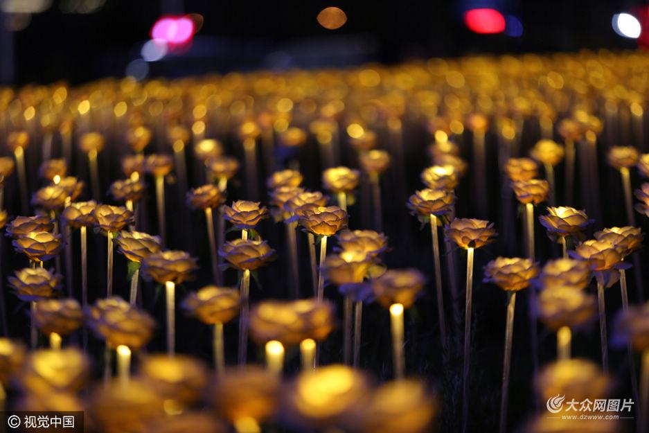 5万朵发光玫瑰扮靓青岛西海岸 增添浪漫气氛