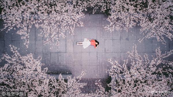 浙大校园内樱花开放风景醉人